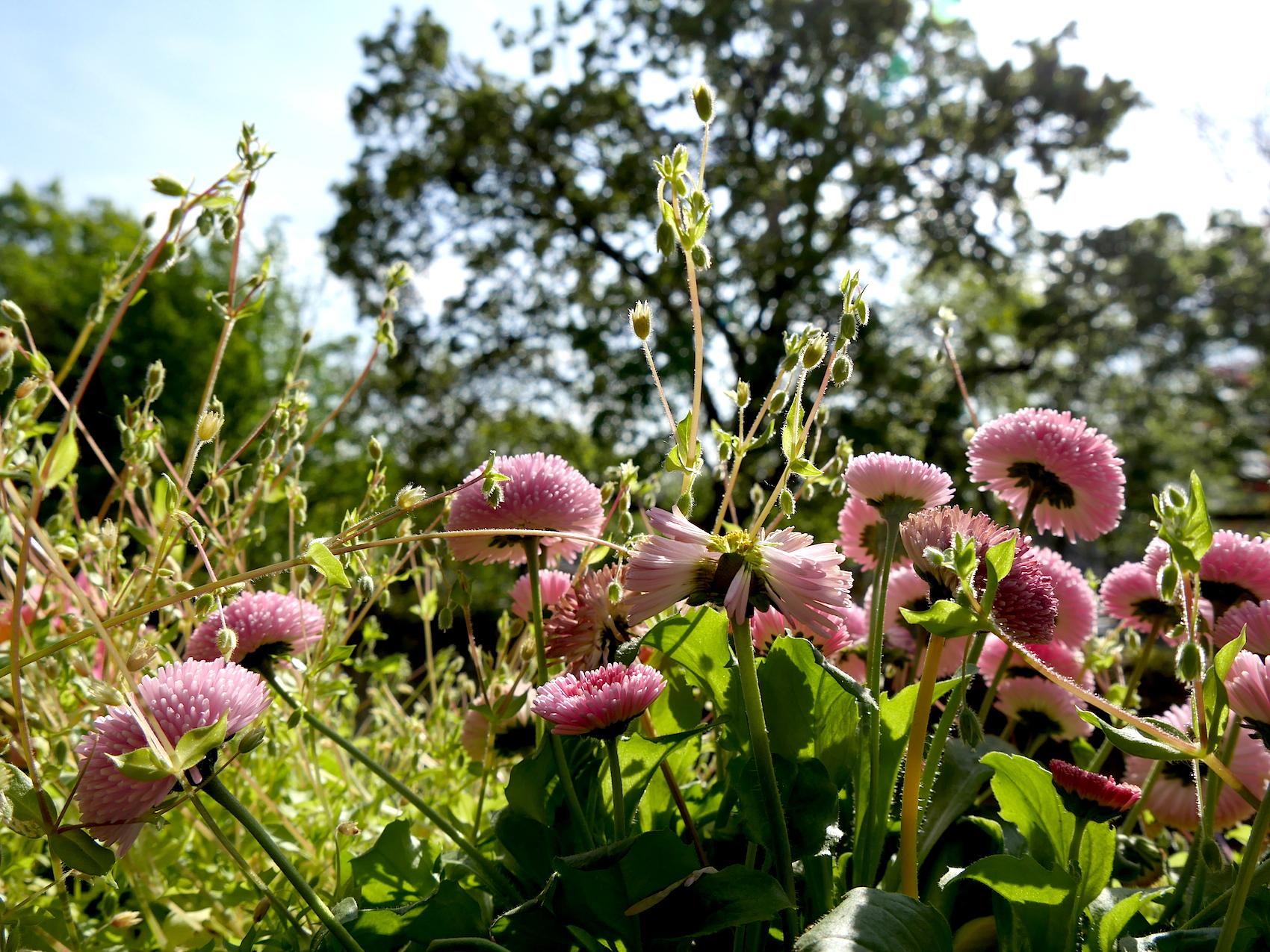 spring flowers paris